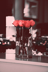 .. (Not Soo Innocent.Busy.) Tags: pink red bw rose mood bokeh riyadh ksa redmood 333333