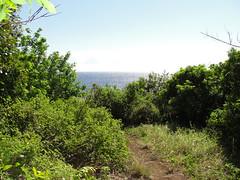 DSC00327 (JFCToronto) Tags: hawaii kapalua sbschampionship