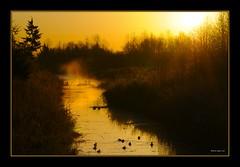Lit in orange (the_coprolite) Tags: orange sun canada water dawn nikon bc britishcolumbia sigma burnaby d300 120400mm
