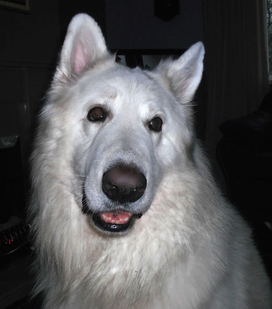 Megapost el mejor amigo de hombre yo amo mi perro