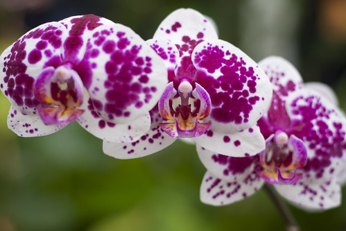 white river garden orchids.
