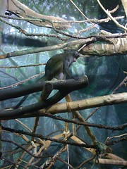 Small Primate House at Lincoln Park Zoo