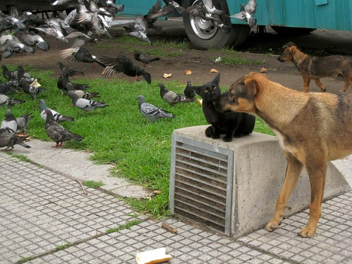 Dogs, Pigeons & Black cat by blmurch.