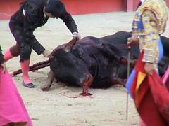 toro sangrando por la boca2