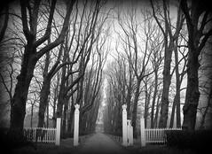 iiiiiiiil l>   <l liiiiiiii (powerfocusfotografie) Tags: road trees castle netherlands fence drive nikon gate path symmetry gateway groningen avenue verhildersum powerfocus