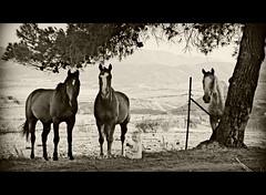 In a blink of an eye (BurstsofSingleMindedness) Tags: california horses playing 2004 pine sepia toddler child inlandempire aunaturel playinginthedirt platinumheartaward favemoifrance