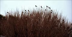 (Behzad No) Tags: life winter sky sun bird birds persian day iran dream strong shiraz  persepolis fars parseh anawesomeshot nikond90  behzadno