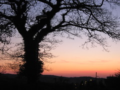 Evening and the tree (Lune Rambler) Tags: sunset sky tree beauty silhouette evening interesting thefourseasons lunevalley bej treesubject saariysqualitypictures platinumbestshot redmatrix platinumpeaceaward lunerambler mygearandmepremium mygearandmebronze mygearandmesilver mygearandmegold mygearandmeplatinum mygearandmediamond