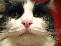 Josie's extreme closeup