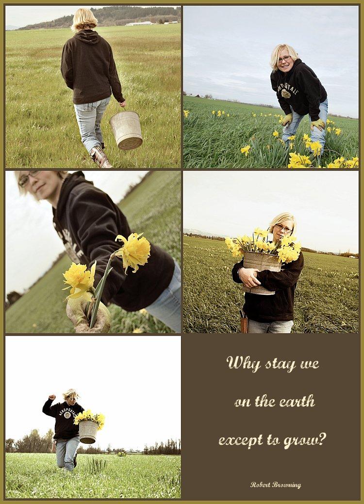 Shannon-Daffodils