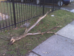 Tree Branch Storm Pelham