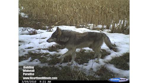 wolforegon03-09-10