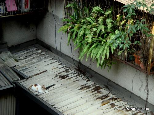 光陰地圖 019_屋簷有貓(20100319)