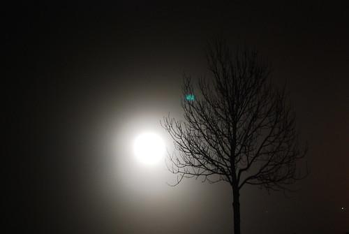 Foggy nights i Svendborg
