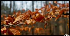 Printemps ?? (ADtour) Tags: nature canon hiver ad printemps couleur feuille 500d