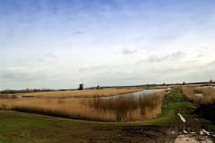 Kinderdijk (CoenV) Tags: sky netherlands grass clouds sony air nederland wolken gras alpha lucht kinderdijk weiland 380 alpha380