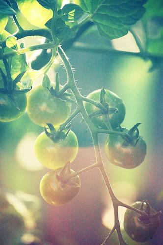 416:1000 Tomatoes redux