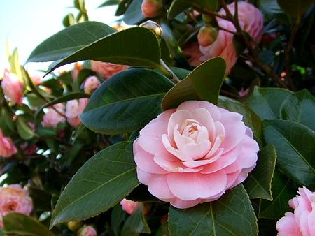 三永水源地 に咲く花