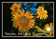 Picnik message from Guest (jbuglione) Tags: madrid light españa flower color colour luz spain flor jardín botánico pilarazaña