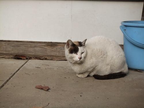 Today's Cat@2010-04-02