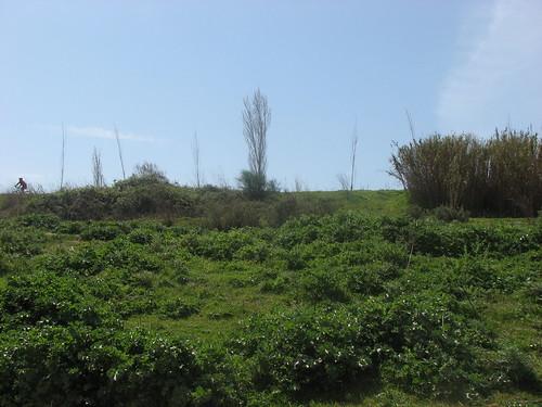 Paseo junto al Llobregat - 14