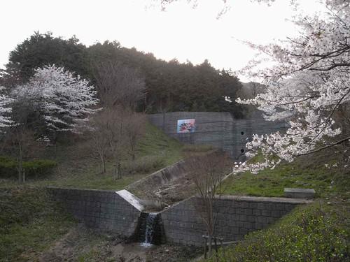<桜>当麻寺奥の公園-08