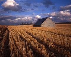 Barn and Wheat Field (Peter Schnurman) Tags: sunset usa fall barn washington unitedstates wheat pullman palouse