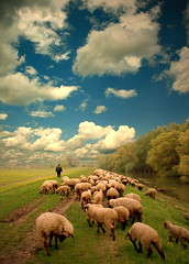 Lonely Shepherd (Aleksandra Radonic) Tags: nature field rural river happy freedom spring village sheep shepherd serbia farming joy photojournalism documentary social cielo balkans pastor f8 danube srbija biodynamic herder serbie