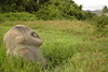 Oba, Monkey statue (Incito.Vacations - Ng Sebastian) Tags: ancientcivilization oba badavalley kalamba megalithofbadavalley