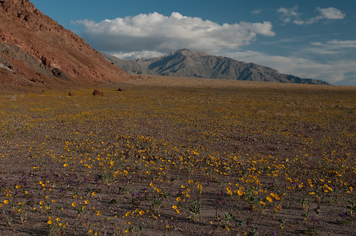 Desert Gold, one of the images from Death Valley