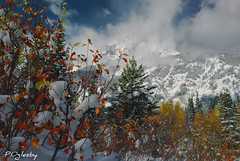 A Grand View (P. Oglesby) Tags: autumn friends snow mountains clouds landscapes tribute 1001nights grandtetonnp thehighlander godlovesyou coth teewinot fallfolliage cathedralgroup theunforgettablepictures platinumheartaward absolutelystunningscapes dragondaggerphoto flickrclassique yourwonderland coth5 1001nightsmagiccity dbushue photocontesttnc11