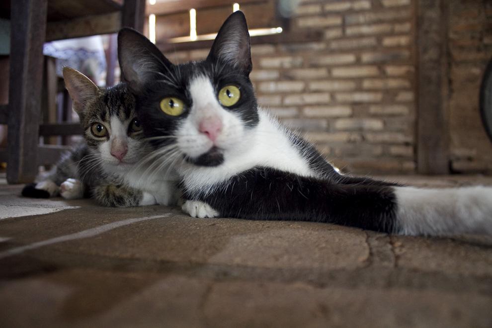 Gatos descansan mientras esperan las sobras del almuerzo. (Puerto La Niña, San Pedro, Paraguay - Tetsu Espósito)