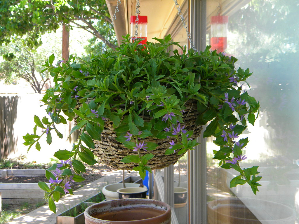 New Hanging Basket