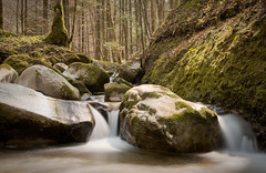 Little Stream (brue') Tags: river stream bach wald langzeitbelichtung