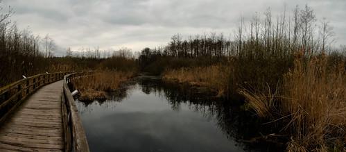 Frühlingswanderung - Feuchtgebiet