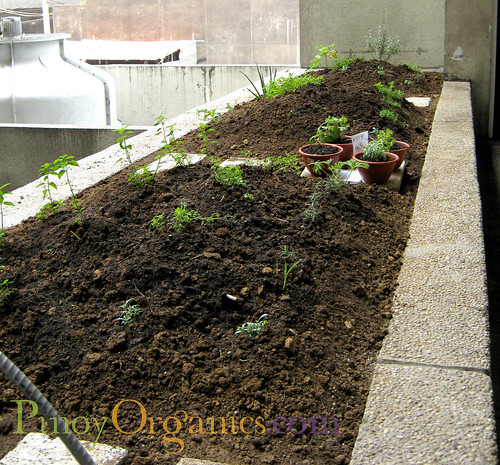 LBV Herb Garden