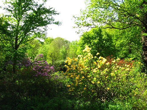 Cannizaro Park in Spring