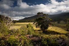 Tasman Idyll