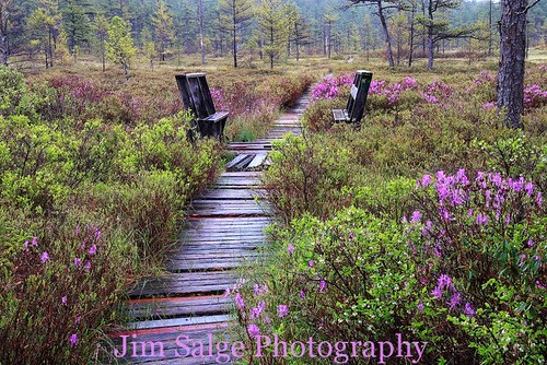Jim Salge Photography - Spring at the Heath