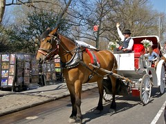 19th century taxi (Riex) Tags: nyc newyorkcity horse usa ny newyork animal cheval spring carriage centralpark manhattan buggy bigapple printemps a100 amount biga caleche leasure sal1680z minoltaamount carlzeisssonyf35451680mm variosonnartdt35451680