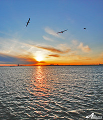 Lots of dreams.. (ZiZLoSs) Tags: new york sea usa ny birds sunrise canon eos sigma 1020mm aziz sigma1020mm abdulaziz  450d zizloss  canoneos450d lotsofdreams 3aziz almanie abdulazizalmanie httpzizlosscom