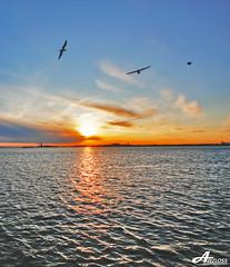 Lots of dreams.. (ZiZLoSs) Tags: new york sea usa ny birds sunrise canon eos sigma 1020mm aziz sigma1020mm abdulaziz عبدالعزيز 450d zizloss المنيع canoneos450d lotsofdreams 3aziz almanie abdulazizalmanie httpzizlosscom