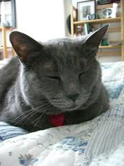 ella is a sleepy loaf