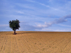 Solo (Giuseppe Suaria) Tags: sky tree field cielo campo albero marche ancona anawesomeshot theunforgettablepictures
