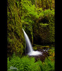 Columbia River Gorge - Spring 2010 (Jesse Estes) Tags: green waterfall lush ferns columbiarivergorge jesseestes jesseestesphotography lookssticky