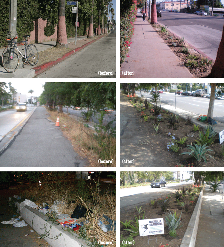 Guerrilla Gardening in LA