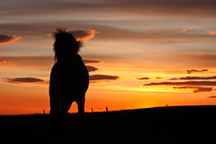 HoHo sunset (Bkort photography) Tags: sunset horse iceland clauds bragi kort bkort