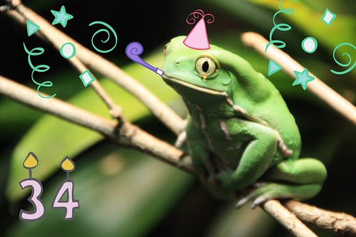 Waxy Monkey Frog Says Happy Birthday, Schnookie!