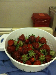 Jodie came to see last night and brought along a basket of the most amazing strawberries. She and Karen are my community garden plot neighbors, and they have a strawberry patch there. SO yummy. Cant wait to much the onese she left me for breakfast.
