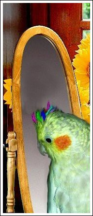 mirror12